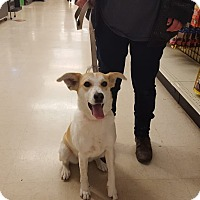 Adopt A Pet :: Rylee - St John, IN