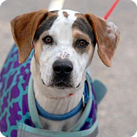 Adopt A Pet :: Duke - Pottsville, PA