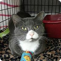 Adopt A Pet :: Lilah - Acushnet, MA