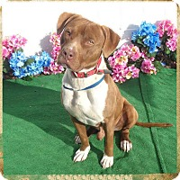 Adopt A Pet :: SID - Marietta, GA