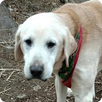 Adopt A Pet :: Gussie - Capon Bridge, WV