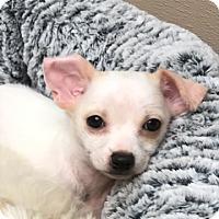 Adopt A Pet :: Chunk bonded with Lulu - Las Vegas, NV
