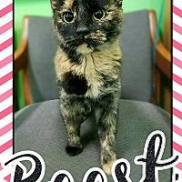 Adopt A Pet :: Baast - Edwards AFB, CA