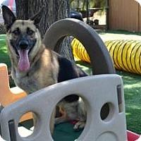 Adopt A Pet :: Jersey - San Diego, CA
