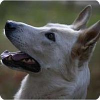 Adopt A Pet :: Lennon - Conyers, GA
