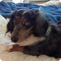 Adopt A Pet :: HOWSER - Portland, OR