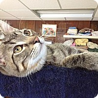 Adopt A Pet :: Sumac - Byron Center, MI