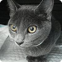 Adopt A Pet :: Helen - Brooklyn, NY