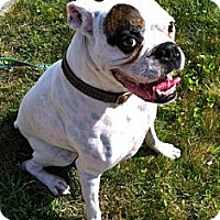 Adopt A Pet :: Petey - Foster Home Needed - Grafton, MA