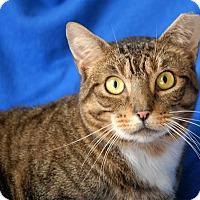 Adopt A Pet :: Piper - Winchendon, MA