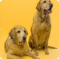 Adopt A Pet :: Beanie and Rex - Warrington, PA