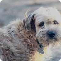 Adopt A Pet :: Buttercup - Woonsocket, RI