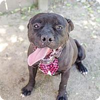 Adopt A Pet :: Dominic - Darlington, SC