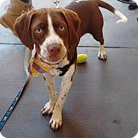 Adopt A Pet :: Coffe - San Diego, CA