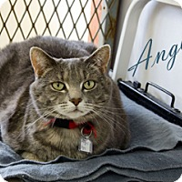 Adopt A Pet :: Angel - Hamilton, MT
