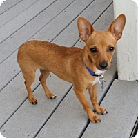 Adopt A Pet :: Samson - Leduc, AB