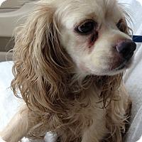 Adopt A Pet :: Bernadette - Sugarland, TX