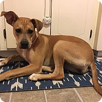Adopt A Pet :: Janey - Knoxville, TN