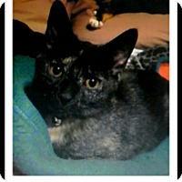 Adopt A Pet :: Metallica - Trevose, PA
