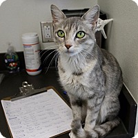 Adopt A Pet :: Katy - Edgewood, NM