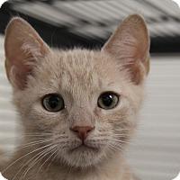 Adopt A Pet :: Teebo - Sarasota, FL