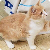 Adopt A Pet :: Leo - Bedford, VA