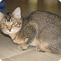 Adopt A Pet :: Melba - Polson, MT