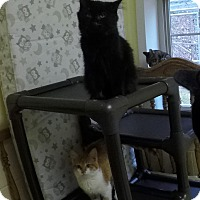 Adopt A Pet :: Puff - Salem, WV