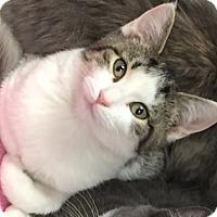 Adopt A Pet :: Sledge - Somerset, KY