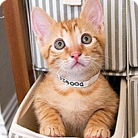 Adopt A Pet :: Doogie - Irvine, CA
