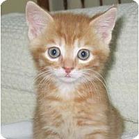 Adopt A Pet :: keegan - Richmond, VA