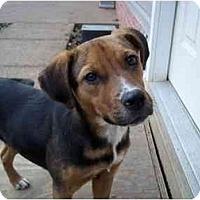 Adopt A Pet :: Liza - Adamsville, TN