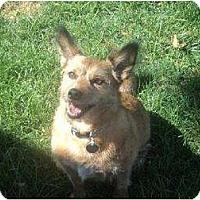 Adopt A Pet :: Sparky - Riverdale, NE