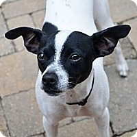 Adopt A Pet :: Bodie - Knoxville, TN