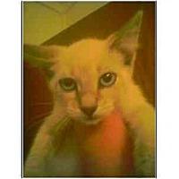 Adopt A Pet :: Tonia - Owasso, OK