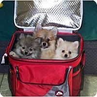 Adopt A Pet :: Bud - Antioch, IL
