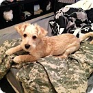 Adopt A Pet :: Ellie and Jethro