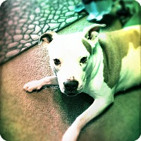 Adopt A Pet :: hazel - grants pass, OR
