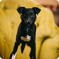 Adopt A Pet :: Bandit - Portland, OR
