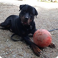 Adopt A Pet :: Remy - Caledon, ON