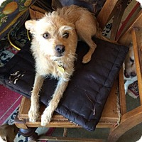Adopt A Pet :: Lucie Lou - Cherry Valley, CA