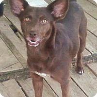 Adopt A Pet :: Kira - Toledo, OH
