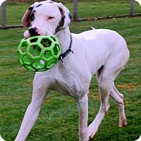Adopt A Pet :: Elsa - Martinsburg, WV