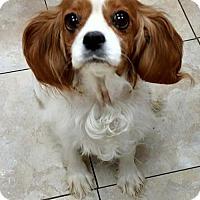 Adopt A Pet :: Anna - Newark, DE