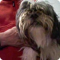 Adopt A Pet :: SUGAR - Atlanta, GA