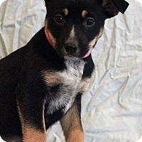Adopt A Pet :: Marley - Waldorf, MD