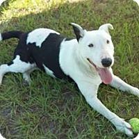 Adopt A Pet :: Annie - Lake Pansoffkee, FL