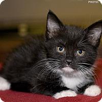 Adopt A Pet :: Moses - Medina, OH