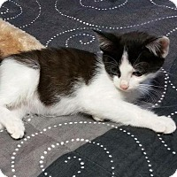 Adopt A Pet :: Christian - Fenton, MO