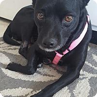 Adopt A Pet :: Ellie - Worcester, MA